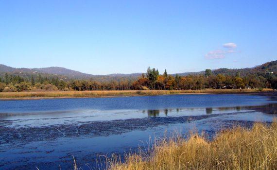 Phoenix Lake Restoration Project TUD